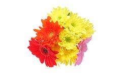 Букет хризантемы и маргаритки Трансвааля в белой предпосылке Стоковое Изображение
