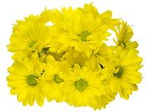 Букет хризантемы Стоковые Фото