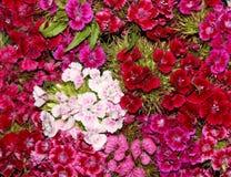 букет цветастый Стоковые Изображения