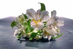 Букет цветастых цветков Стоковое фото RF