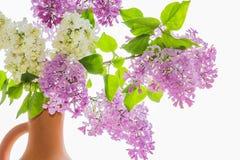 Букет цветений сирени в опарнике Стоковые Фотографии RF