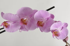 букет цветет весна Стоковое Изображение
