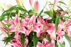 букет цветет лилия Стоковое Изображение