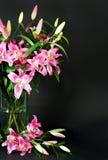 букет цветет лилия Стоковые Фотографии RF
