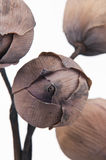 букет цветет лотос Стоковое Изображение