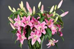 букет цветет пинк лилии Стоковые Изображения