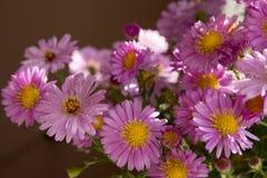 букет цветет пинк Стоковые Изображения