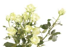Букет цветка белых роз на белой предпосылке Стоковые Изображения RF