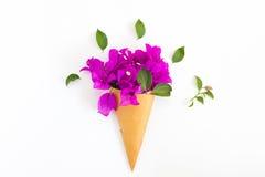 Букет цветка бугинвилии бумажного на белой предпосылке Стоковое Изображение RF