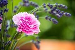 Букет цветка гвоздики и лаванды горизонтальный Стоковое Фото