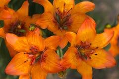 Букет цветка лилии Стоковые Фотографии RF