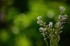 Букет цветка как фон Стоковая Фотография