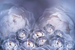 Букет цветков голубых белых пионов на расплывчатой предпосылке полутонового изображения Винтажный состав цветка карточка 2007 при Стоковые Изображения RF