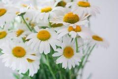 Букет цветков маргаритк-стоцвета Стоковые Изображения RF