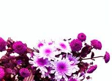 Букет цветков от белой и зеленой хризантемы декор праздничный стоковые изображения rf