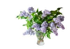 Букет цветков сирени весны изолированных на белизне Стоковые Изображения RF