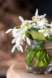 Букет цветков snowdrop Стоковые Изображения RF