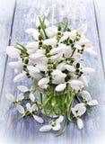 Букет цветков snowdrops в вазе Стоковое Изображение
