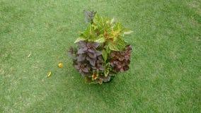 Букет цветов Стоковое Изображение RF