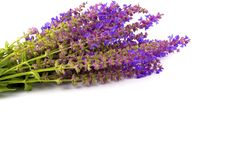 Букет целебного шалфея травы на белой предпосылке для текста стоковое изображение rf