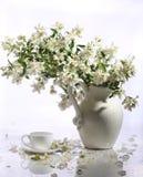 Букет чашки чаю и jasmin в керамической вазе на белом backg Стоковое Изображение