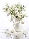 Букет чашки jasmin и чая на белой предпосылке Стоковая Фотография