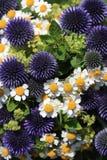 Букет чудесного свежего лета цветет с маргаритками и Thistles Стоковые Фотографии RF
