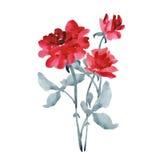 Букет элегантных красных роз с серым цветом выходит на белую предпосылку акварель Стоковое Изображение