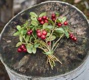 Букет ягод клюквы лежа на деревянной поверхности стоковые фото