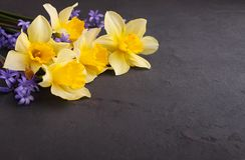Букет daffodils и цветков сирени Стоковое Изображение