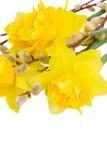 Букет daffodils с catkins закрывает вверх стоковые фотографии rf