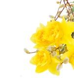 Букет daffodils с catkins стоковые фотографии rf