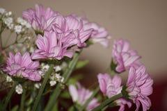 Букет mauve и белых цветков Стоковые Изображения RF