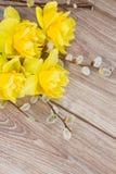 Цветки Narcissus с catkins Стоковые Изображения RF