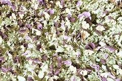 Букет Pansies стоковое фото rf
