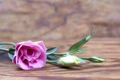 Букет risianthus на деревянной предпосылке Стоковое Изображение RF
