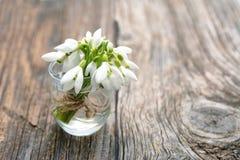 Букет snowdrops цветков красивой весны первых Стоковая Фотография RF