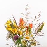 Букет Wildflower изолированный на белизне стоковое изображение