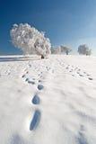Зима в черной пуще Стоковые Фотографии RF