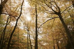 Буки Burnham, Великобритания - 7-ое ноября 2016: Сень деревьев осени на буках Burnham в Buckinghamshire Стоковое Изображение RF