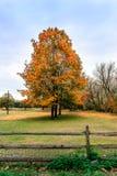 Буколический ландшафт лошадей пася под деревьями осени Стоковое фото RF