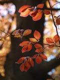 Бук весны Стоковое Фото