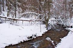 Бук Snowy и сосновый лес в последней зиме, национальный парк Sila, Калабрия, южная Италия стоковые фотографии rf