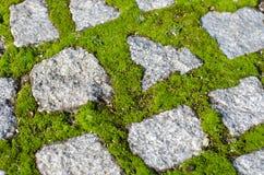 Булыжники и мох Стоковая Фотография