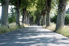 Бульвар выровнянный деревом в Провансали, Франции Стоковое фото RF