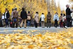 Бульвар гинкго токио Стоковая Фотография RF