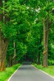 Бульвар деревьев Стоковые Фотографии RF