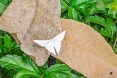 Бумага бабочки на лист Стоковые Изображения
