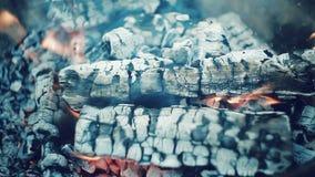 Бумага, древесина и уголь горя весело сток-видео