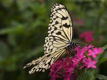 бумага змея бабочки Стоковая Фотография RF